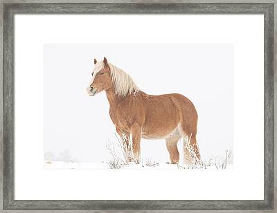 Smiling Palomino In The Snow Framed Print by James BO  Insogna