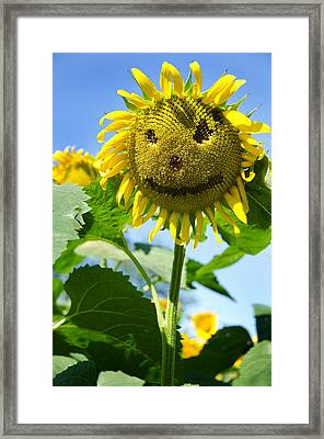 Smiling Sunflower Framed Print by Donna Doherty