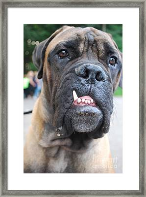 Smiling Framed Print by Susan Hernandez