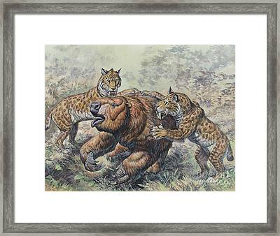 Smilodon Dirk-toothed Cats Attacking Framed Print
