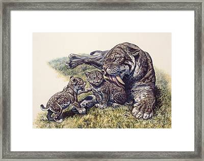 Smilodon Sabertooth Mother And Her Cubs Framed Print by Mark Hallett
