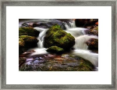 Smith Creek Moss And Fern Framed Print