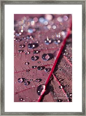 Smoke Bush Droplets Framed Print by Anne Gilbert