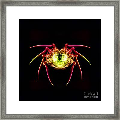 Smoke Spider Framed Print by Steve Purnell