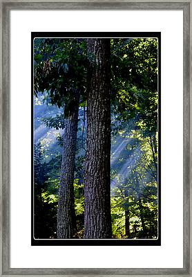 Smoke Through The Trees Framed Print