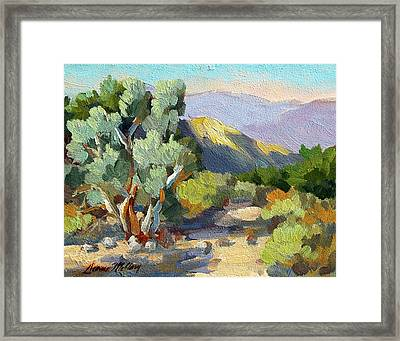 Smoke Trees At Thousand Palms Framed Print