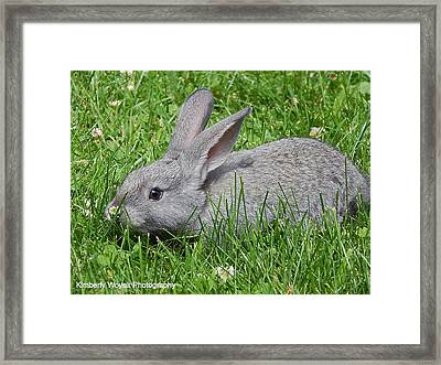 Smokey  Framed Print