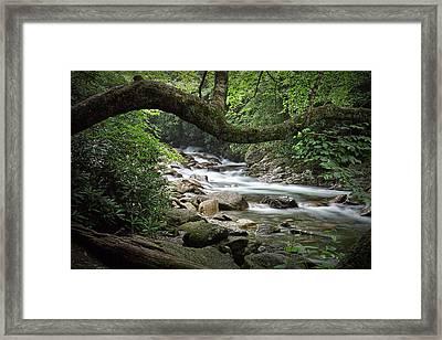 Smokey Mountain Stream. No 547 Framed Print by Randall Nyhof