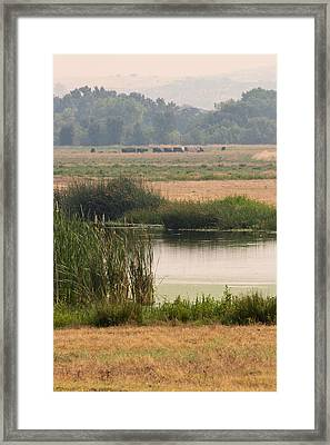Smokey Pasture And Pond Framed Print by Sarah Mueller