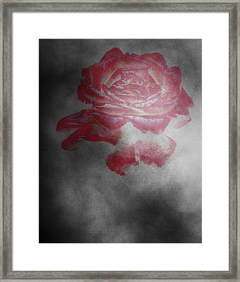 Smokey Rose Framed Print