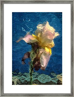 Smoking Iris Framed Print