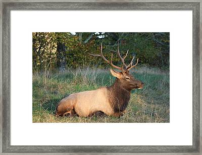 Framed Print featuring the photograph Smoky Mountain Elk by Mountains to the Sea Photo
