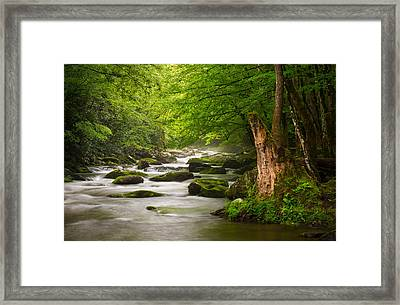 Smoky Mountains Solitude - Great Smoky Mountains National Park Framed Print by Dave Allen