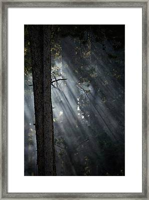 Smoky Sunlight Filtering Framed Print by Nick Dale