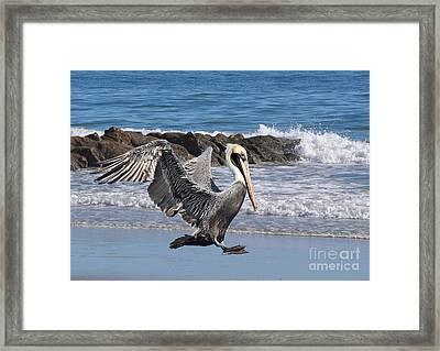 Smooth Landing Framed Print by Kathy Baccari