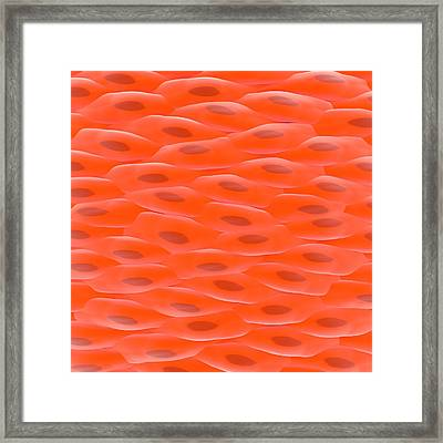 Smooth Muscle Tissue Framed Print