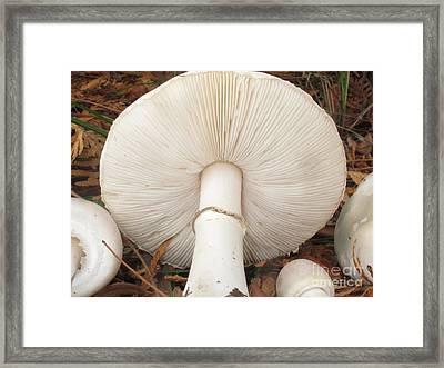 Smooth Parasol Mushroom Framed Print