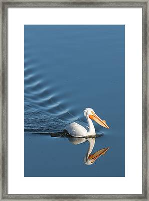 Lake Cruiser Framed Print by Jan Davies