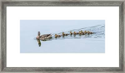 Smooth Sailing Framed Print by Loree Johnson