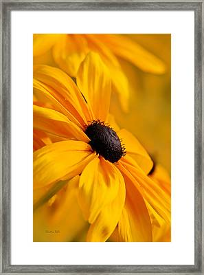 Smothered In Gold Framed Print