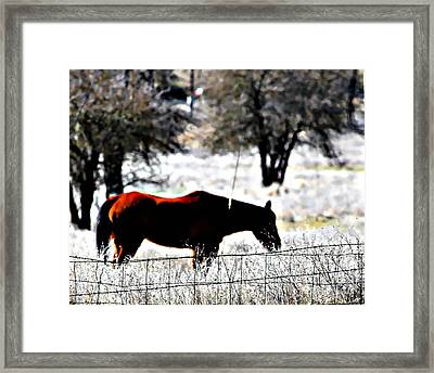 Snack Recess Framed Print by Naomi Richmond
