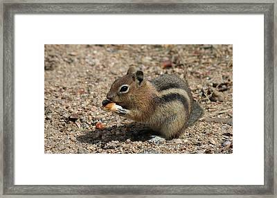 Framed Print featuring the photograph Snack Time by Christy Pooschke