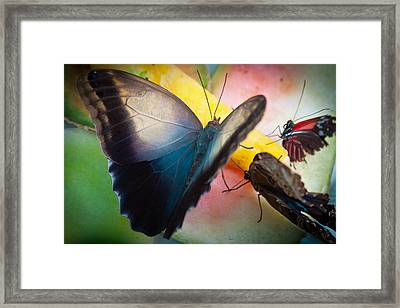 Snack Time For The Butterflies Framed Print by David Patterson