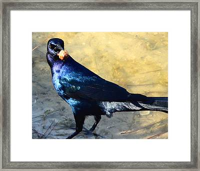 Snack Time Framed Print by Julie Cameron