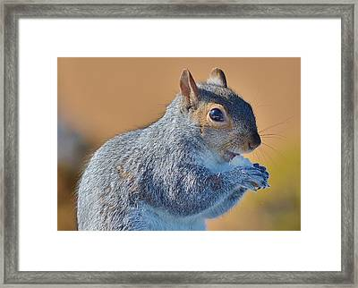 Snack Time Framed Print by Thomas  MacPherson Jr