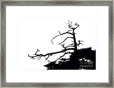 Snag Framed Print by Russell Christie