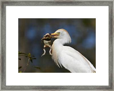 Snagged Framed Print by Kathy Baccari