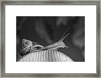 Snail And Mushroom Framed Print by Nailia Schwarz
