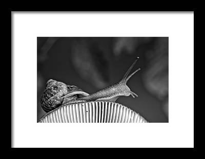 Craw Framed Prints