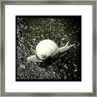 Snail Black And White Framed Print
