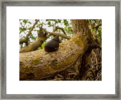 Snail Framed Print by Carl Engman