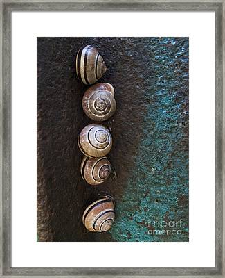 Snail Colony Framed Print