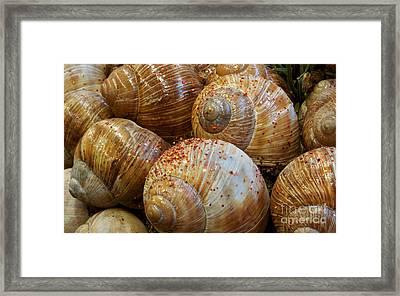 Snail Houses Framed Print by Jolanta Meskauskiene
