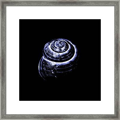 Snail In Blue Tone Framed Print
