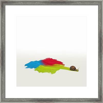 Snail In Oils Framed Print