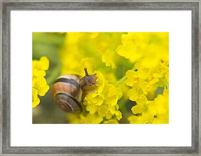 Framed Print featuring the photograph Snail by Jaroslaw Grudzinski