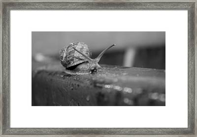 Snail Framed Print by Lora Lee Chapman