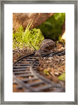 Snail On Train Tracks  Framed Print