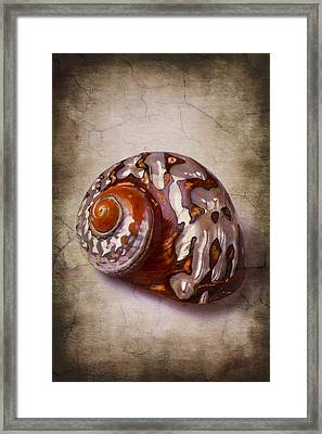 Snail Sea Shell 3 Framed Print by Garry Gay