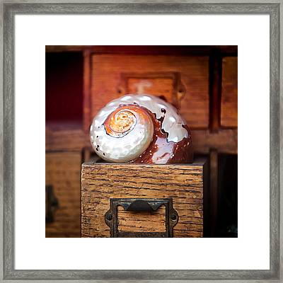 Snail Shell Framed Print by Art Block Collections