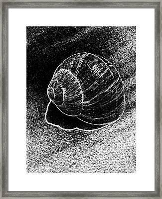 Snail Shell Black And White Art No.11 Framed Print by Drinka Mercep