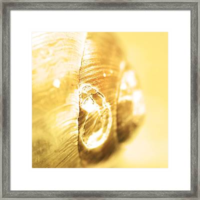 Snail Shell In Yellow Tone Framed Print