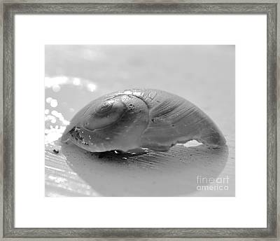 Snail Shell Framed Print