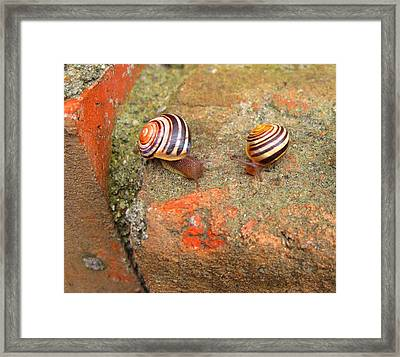 Framed Print featuring the photograph Snail Snail The Gangs All Here by Mary Bedy