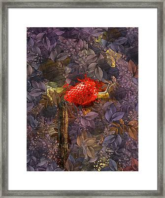 Snail Sory - S14c Framed Print by Variance Collections