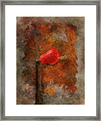 Snail Sory - S19b Framed Print by Variance Collections